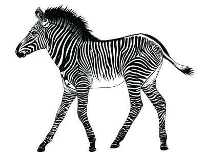 400x300 baby zebra drawing cute baby zebra tattoo design cute baby zebra