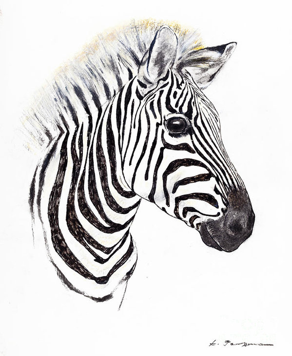 599x732 Pastel Drawing Zebra For Free Download