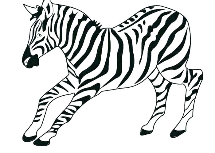 700x499 Printable Animal Coloring Pages Zebra Print Kids Color Craft