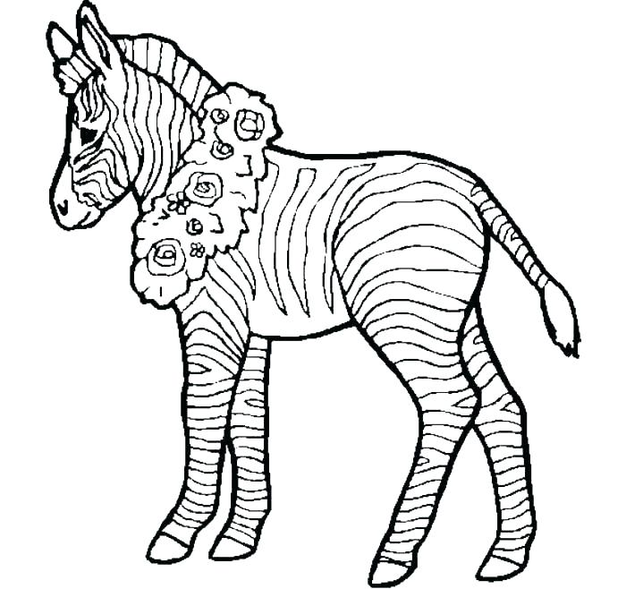 700x658 zebra pictures to print zebra coloring pages to print s free zebra