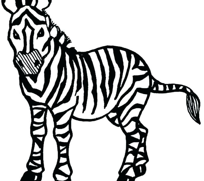 678x600 Zebra Print Coloring Pages