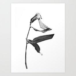 264x264 Zen Garden Art Prints