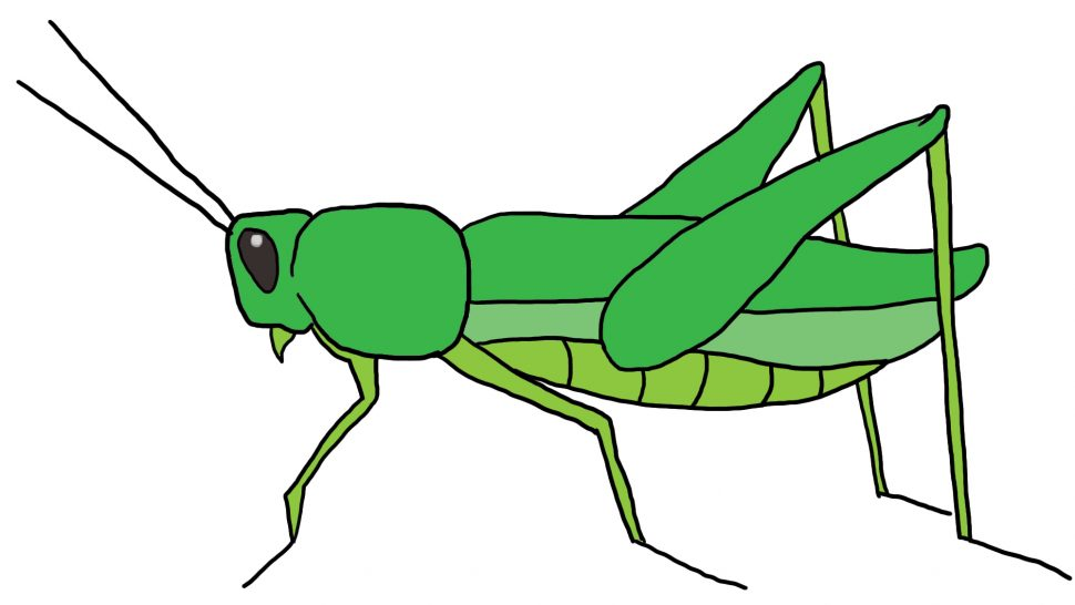 970x546 Coloring Pages Elegant Grasshopper For Kids Clipart 4 Coloring