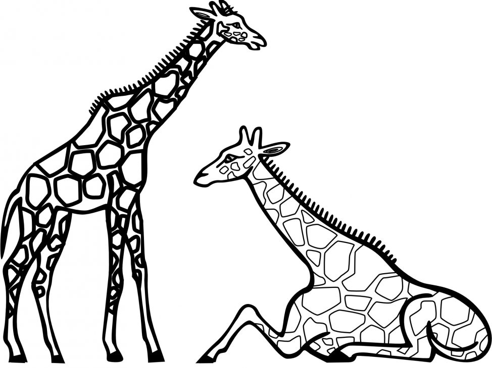 974x730 Coloring Pages Giraffe Colouring Page 4 Coloring Pages Giraffe