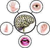 170x164 Five Senses Clip Art