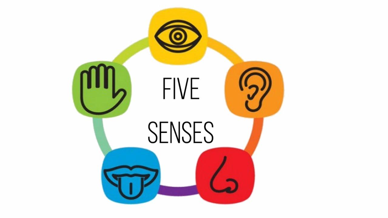 1280x720 Five Senses For Kids Audio Visual Flash Card!