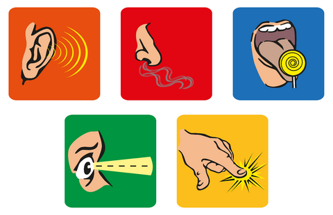 480x310 Senses Explained For Children Hearing, Touch, Sight, Smell