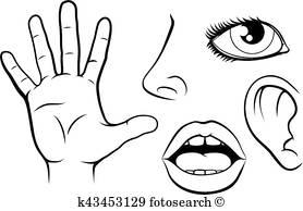 278x194 5 Senses Clip Art Royalty Free. 41 5 Senses Clipart Vector Eps