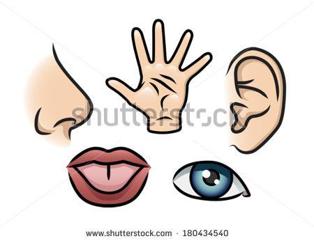 450x346 Five Senses Clip Art
