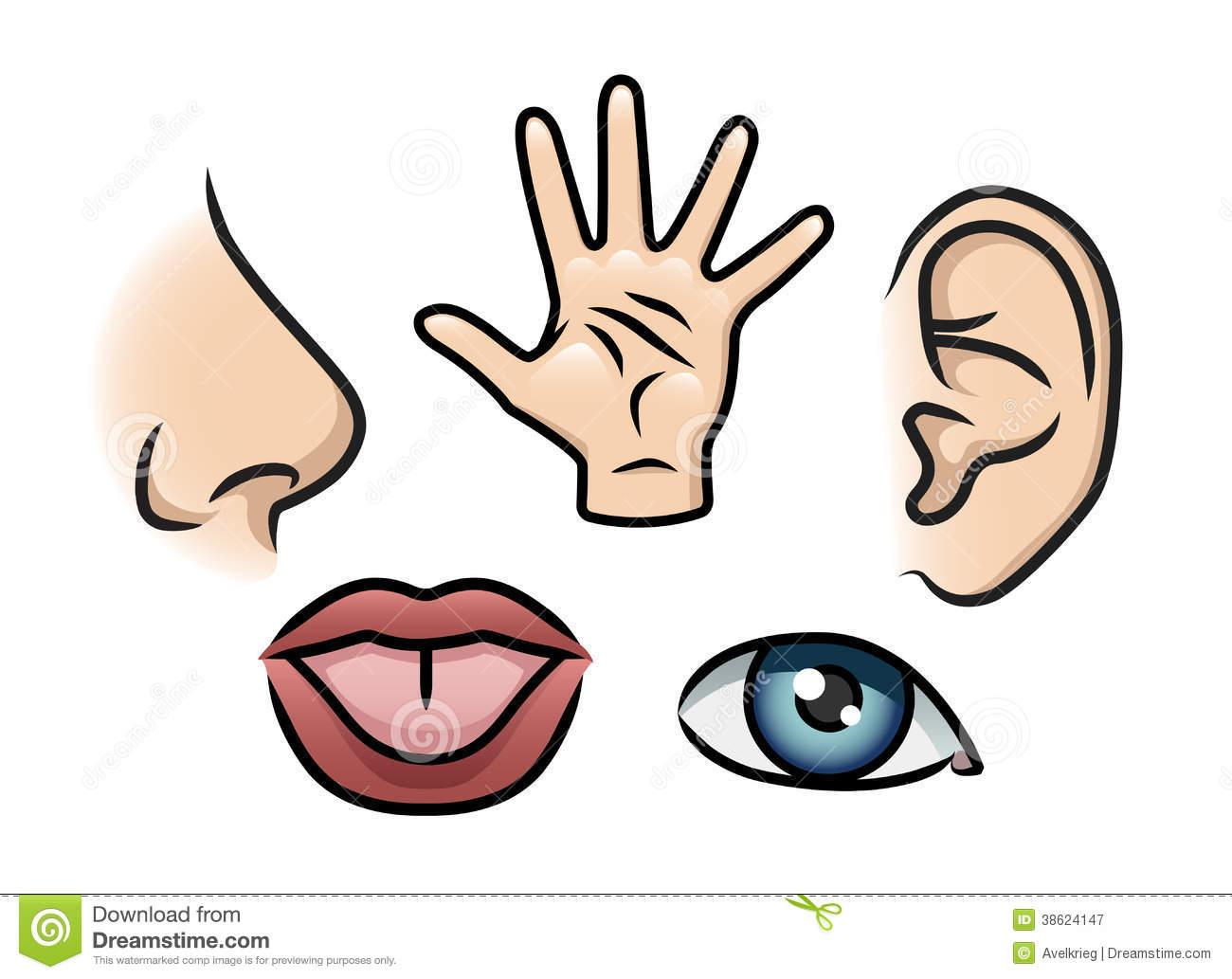 1300x1033 Five Senses Clipart