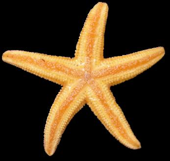 347x328 Starfish Clip Art