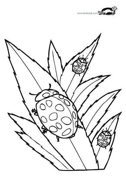 420x594 52 Best Insekten Kleurplaten Images Bugs, Coloring