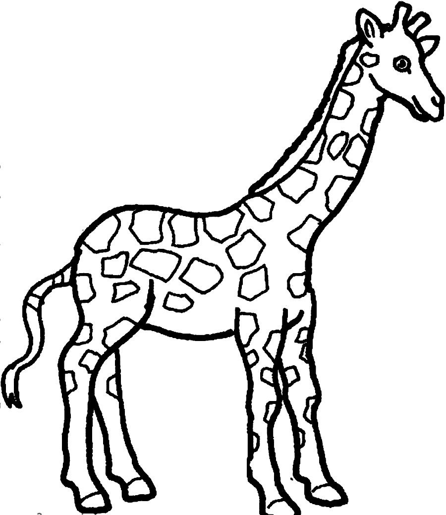 900x1039 Drawn Giraffe Coloring Page