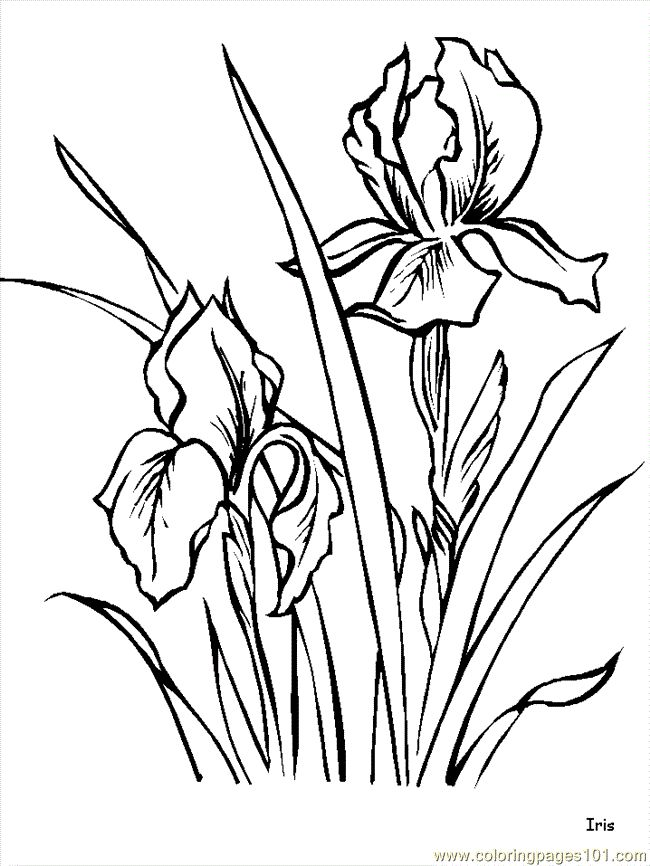 650x866 Best Flower Coloring Pages Ideas Coloring Pages