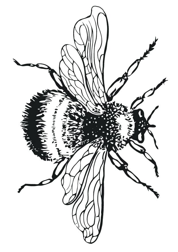 620x875 Bumble Bee Clipart Bumble Bee Coloring Pages Bumble Bee Coloring