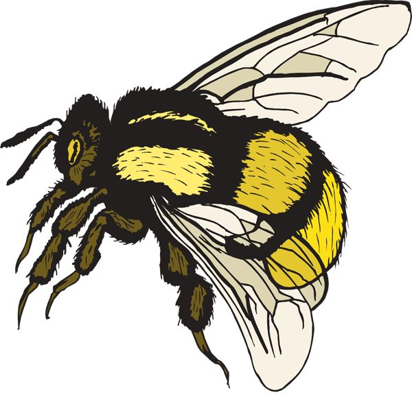 600x576 Bumble Bee Clip Art