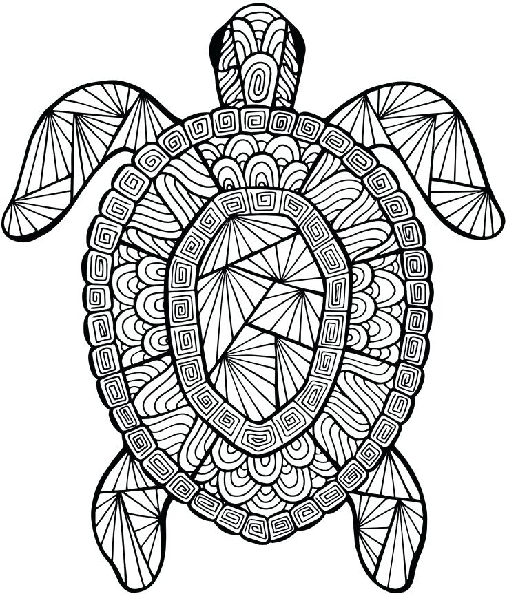 736x866 Detailed Sea Turtle Advanced Coloring Page A To Z Teacher Stuff