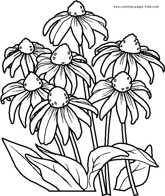539x639 Flower Coloring Pages For Adults Flowers Advanced Coloring Pages