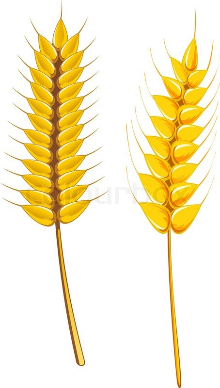 454x800 Wheat Clipart Agriculture
