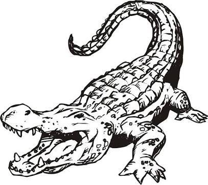 407x361 35 Best Alligator Tattoo Designs Images Design