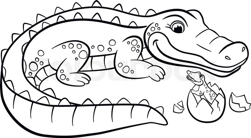 800x442 Coloring Pages. Animals. Mother Alligator Looks
