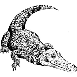 300x300 Alligator Clipart Black And White