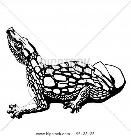 450x470 Alligator Images, Illustrations, Vectors