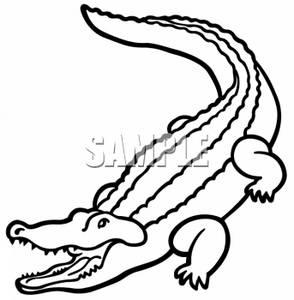294x300 Black Amp White Clipart Crocodile
