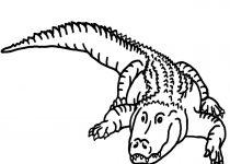 210x150 Clip Art Clip Art Alligator