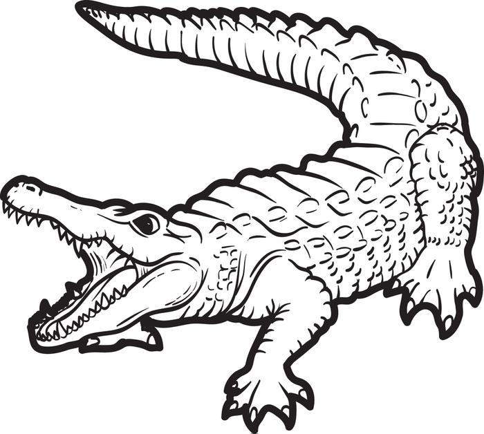 700x628 Free, Printable Alligator Coloring Page For Kids