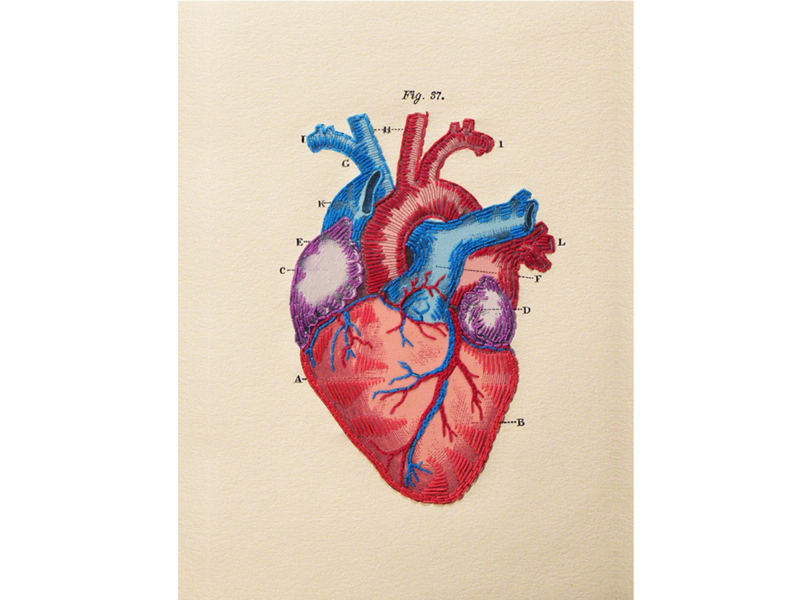 1600x1200 Anatomical Heart. Paper Embroidery By Fabulous Cat Papers