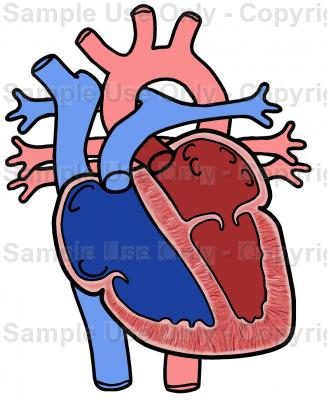 327x400 Chambers Of The Heart