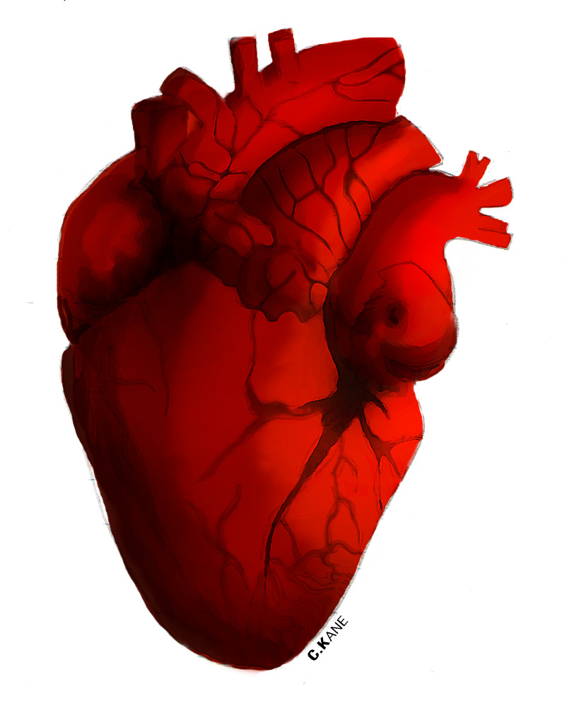 802x994 Human Heart Clip Art Hostted 2
