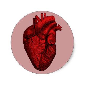 324x324 Anatomical Heart Gifts On Zazzle