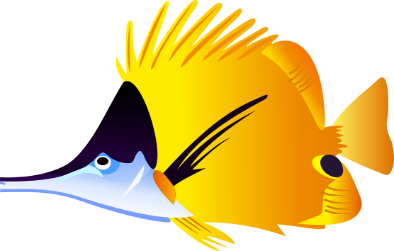 556x354 Image Of Angelfish Clipart