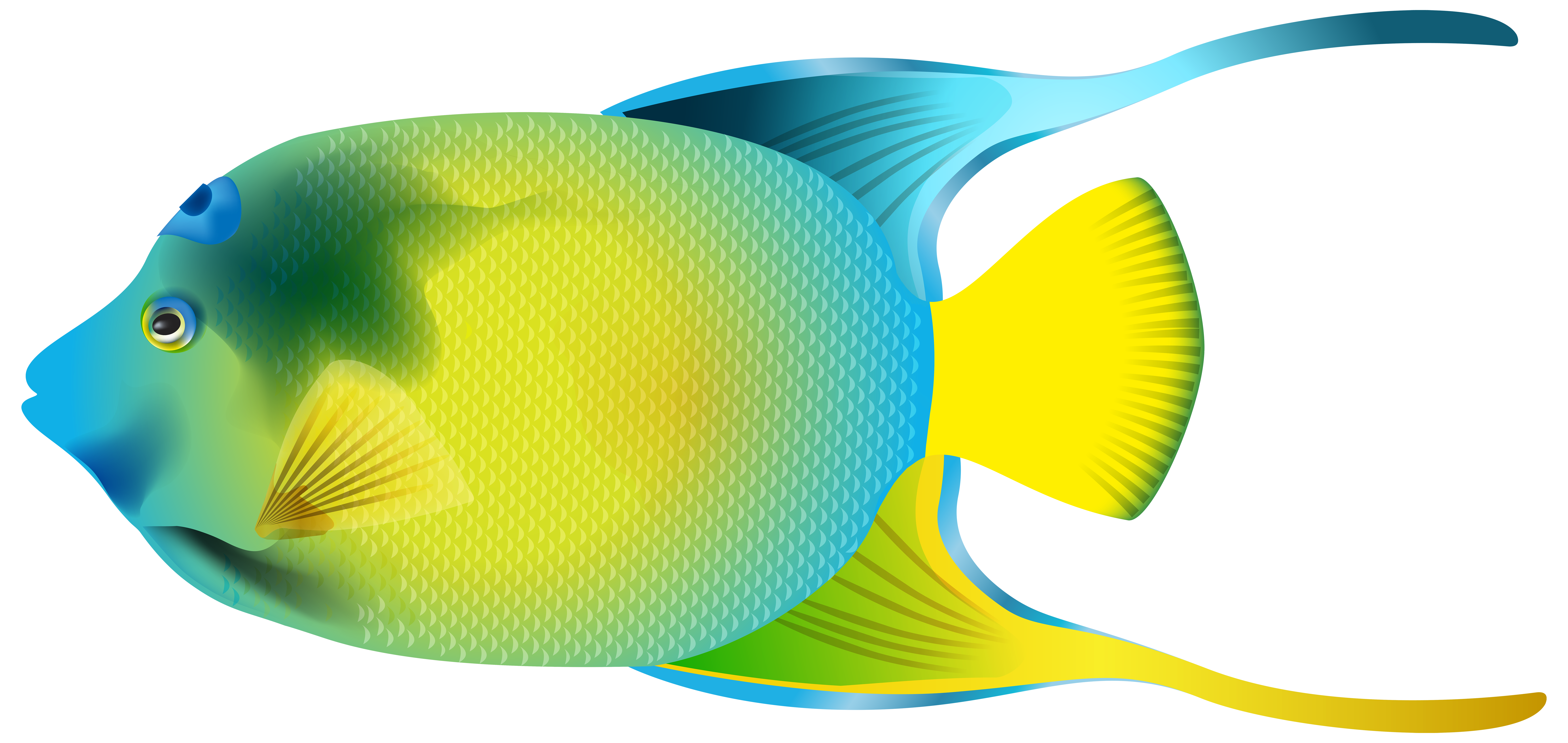 8000x3792 Queen Angelfish Png Transparent Clip Art Imageu200b Gallery