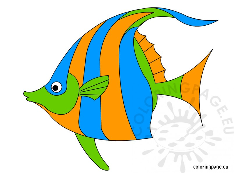 804x595 Angelfish Clipart Orange Fish