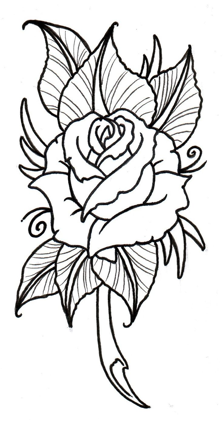 736x1397 The Best Rose Outline Drawing Ideas Rose Tattoo