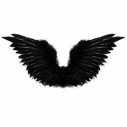 250x250 Black Wings Clipart