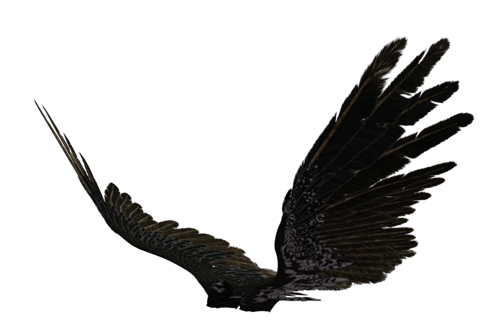 1024x673 Angel Wing 04 By Wolverine041269
