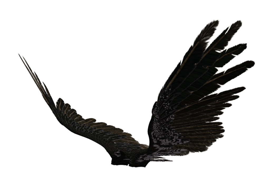 1024x673 Picture Of Dark Angel Wings Allofpicts