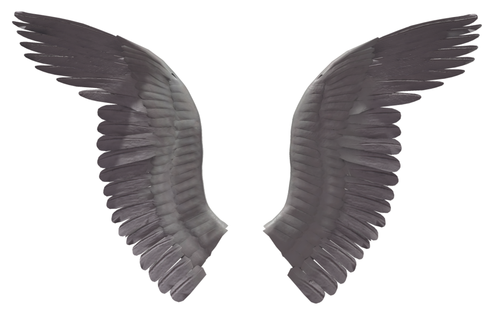 1024x639 Angel Wing (7) By Wolverine041269