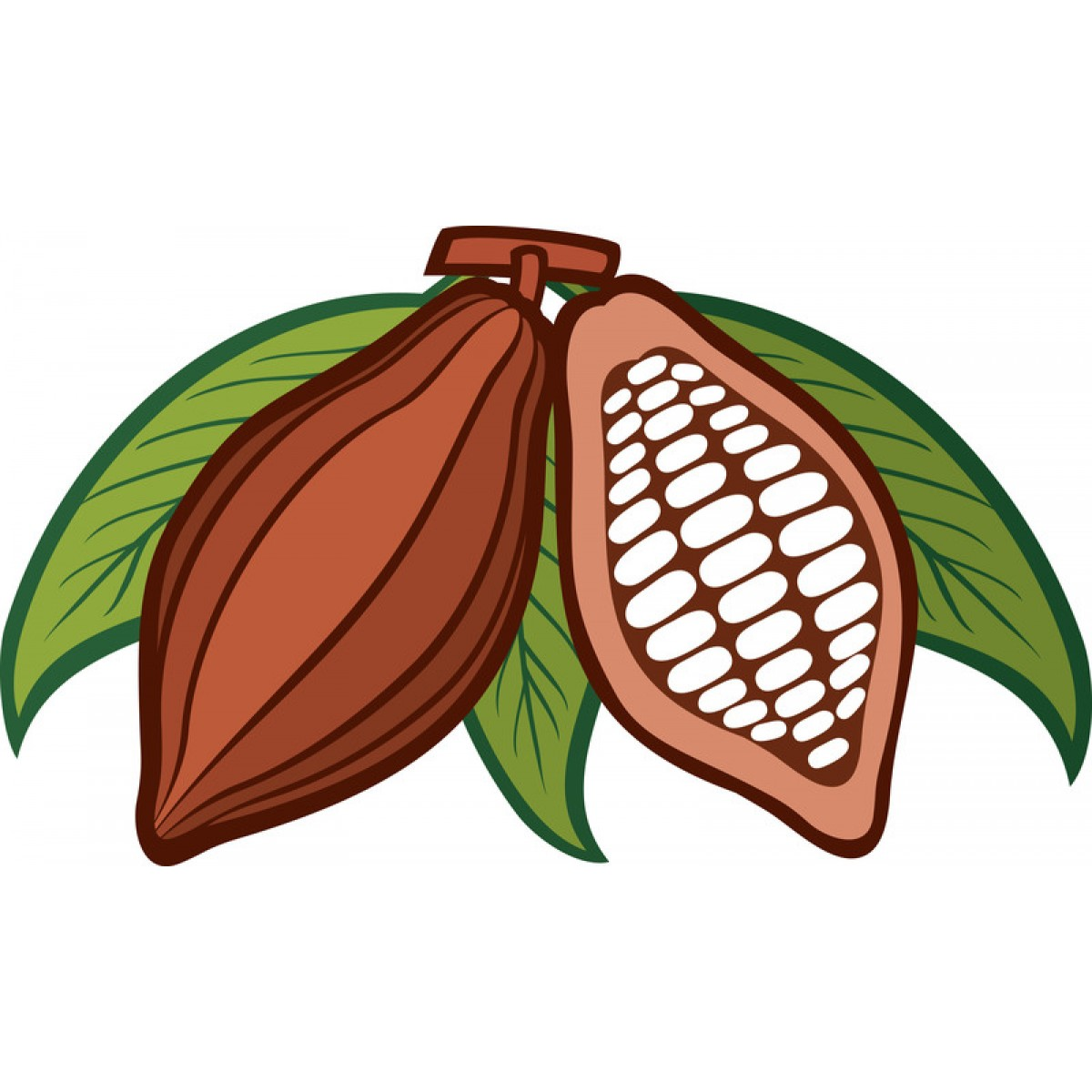 1200x1200 Cacao Clipart