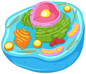 300x261 Close Up Diagram Of Animal Cell Illustration Royalty Free Stock