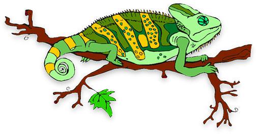505x264 Chameleon Free Animated Animals Bird S Lizard Clipart