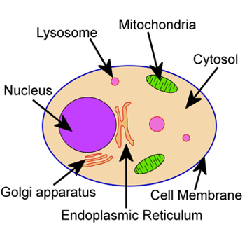360x360 Introduction To Cell Biology