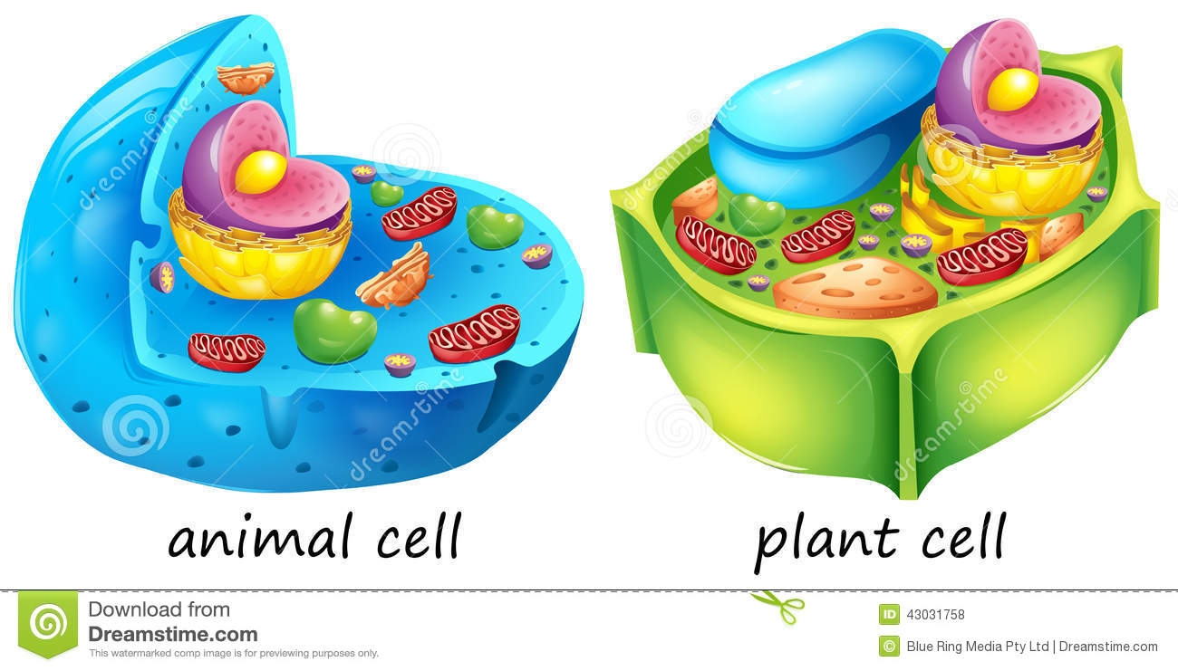 1300x741 Plant And Animal Cell Clipart