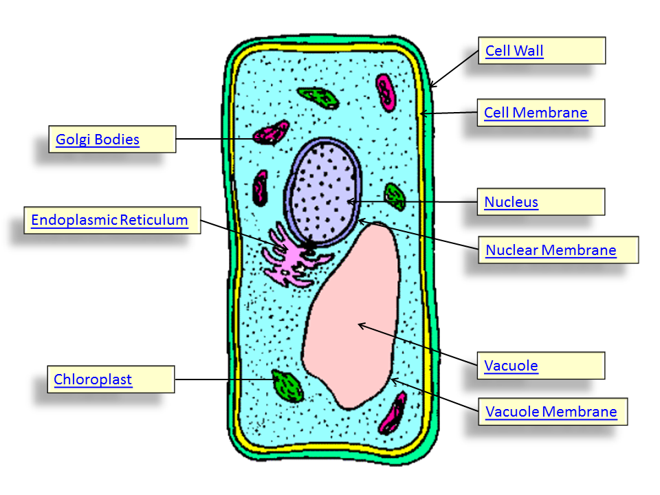 960x720 Top 95 Plant Cell Clip Art