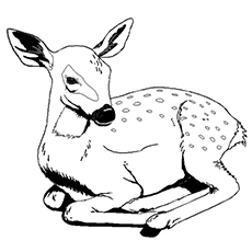 230x230 Top 25 Free Printable Wild Animals Coloring Pages Online