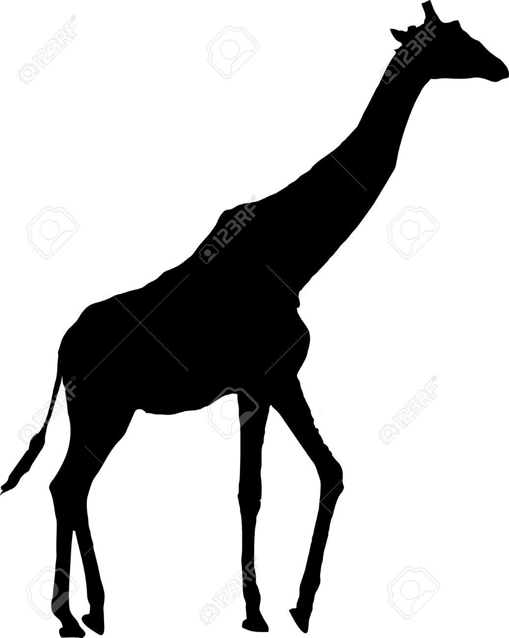 1037x1300 Giraffe, Suggestions For Giraffe, Download Giraffe
